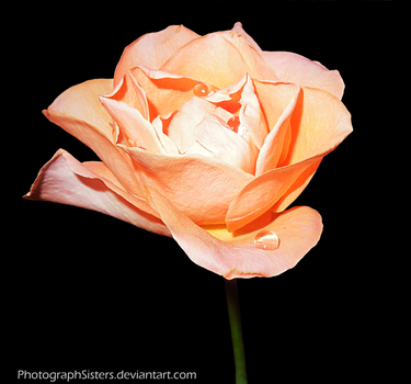 Another Orange. by PhotographSisters