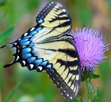 butterfly by coldreality65