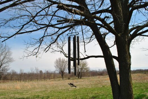 Wind chimes in a tree by BuffaloHeadroom