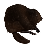 Black Beaver Companion by TokoTime