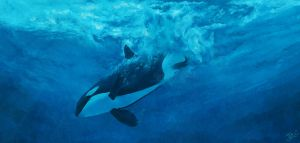 orcinus orca by odontocete