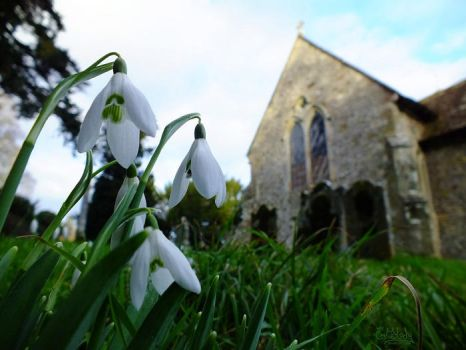 Snowdrops by EmMelody
