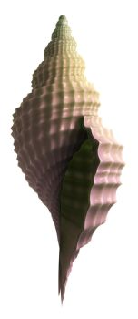 3D Seashell by dudecon
