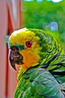 HDR Parrot by ando-san
