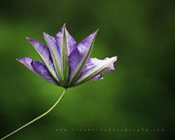 Nature's Cup by TruemarkPhotography