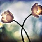 Flowers.. by ChristineAmat