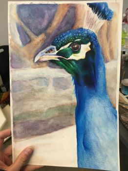 Henry the peacock by Babybee-Babybreeze