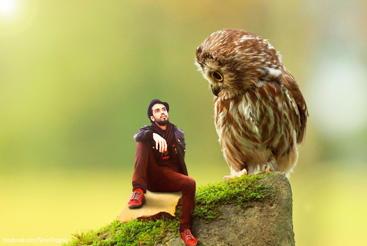 Little-owl by SimoGraphic1