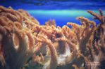 colours underwater by Himmelsfalter