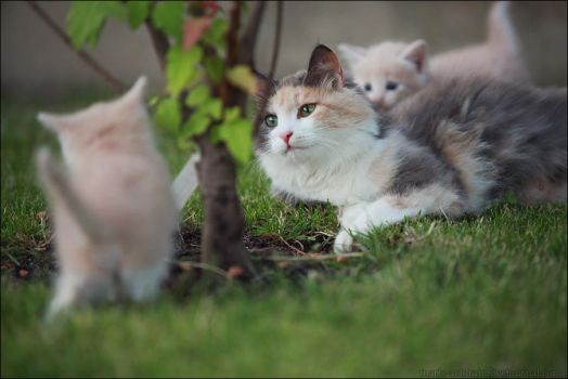 Momma cat. by LinAt