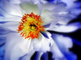 Extreme White by dmguthery