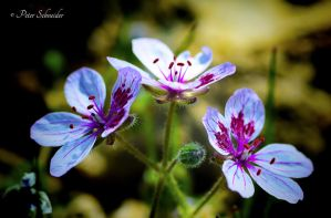 From the beautiful world of plant(XXI). by Phototubby