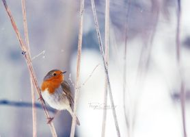 Winter Lingers by FreyaPhotos