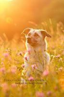 dogs are amazing creatures by Maaira