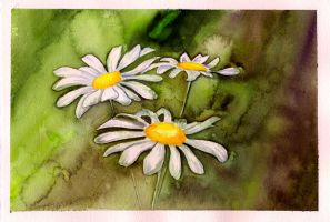 Watercolor Daisies by The-Starhorse