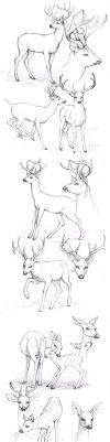 sketches_deers by Anisis