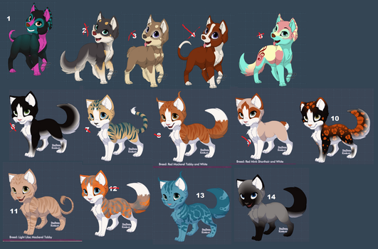 1 point adopts by wolfwarrior22