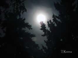 August Moon in the Forest by TRunna