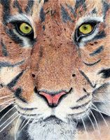 BIC Tiger by photonline