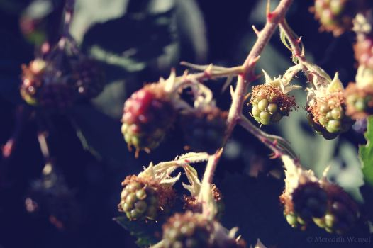 Crowns for Thorny Kings by Meredish