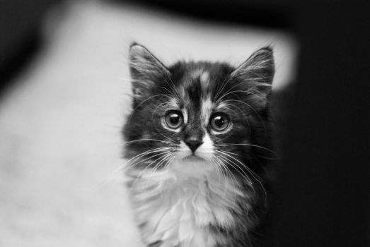 Hello there BW by jonrog
