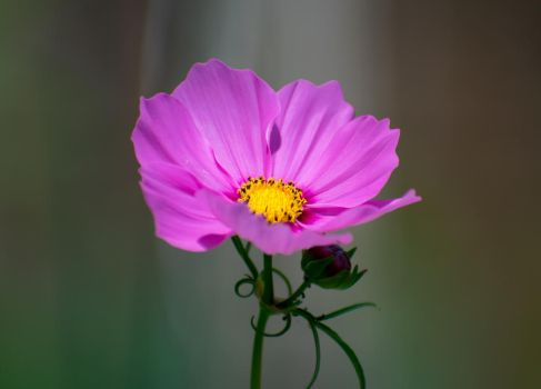 Purple Flower, Recomposed by GabeBr