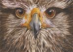 Eagle by colour pencil by Chenyi87