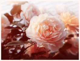 Bellissima by Lilyas