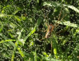 spider in its web full of dew by Angeliqueperrin