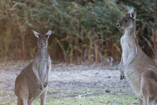 Unedited Roos by BranwenMerla