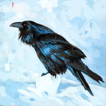 Raven study by carts