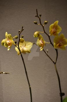CBG 2012 Orchid Show 2 by AmberPalette