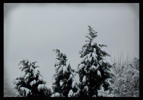 Snowy evergreens by snaphappy101