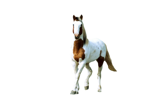 Feral-Horse-PNG by chaseandlinda