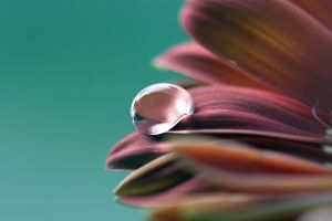 A Flower's Tear by anniejo82