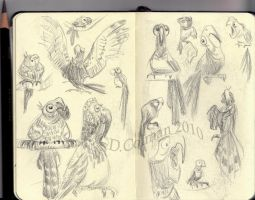 Parrots in Paris by davidsdoodles