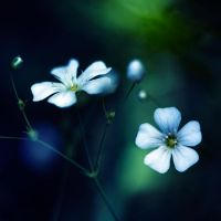 Flowers .. by julie-rc