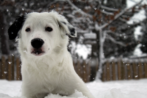 Snowy Puppy by sarac1