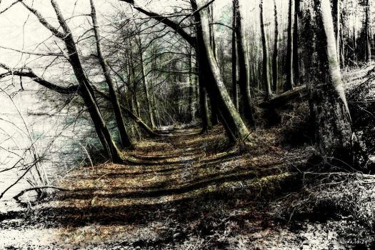 Just a forest.... by wiwaldi24