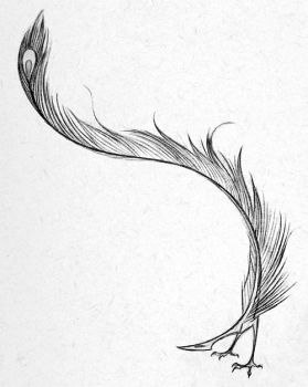Feather by Skia