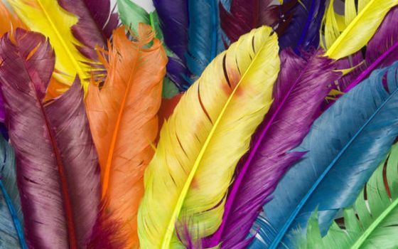 feather in colour by zinph