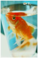 Red  Fish by Beverley