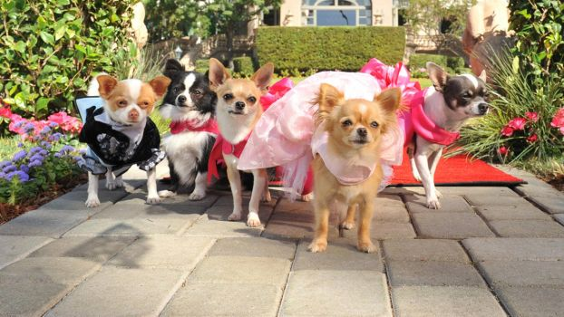 Beverly Hills Chihuahua  Dog Park