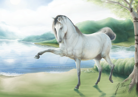 Andalusian by C-Creatio