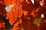 Fall has Arrived by TRE2Photo-n-Design