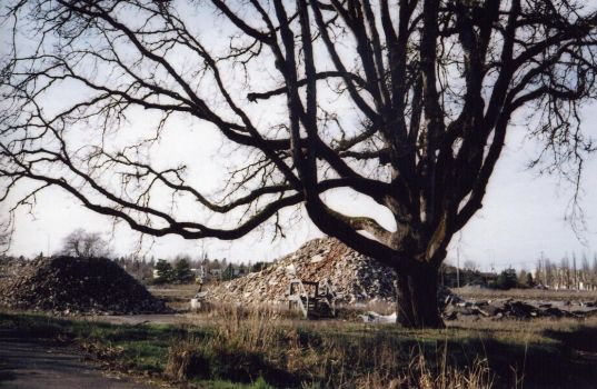tree and rubble 021708 by fairyguts
