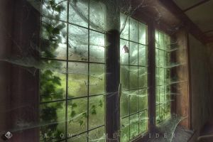 ALONG-CAME-A-SPIDER by DimitriKING