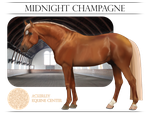 AEC School Horse - Midnight Champagne by Ackerley