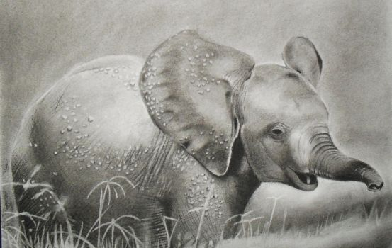charcoal baby elephant sketch by machariart