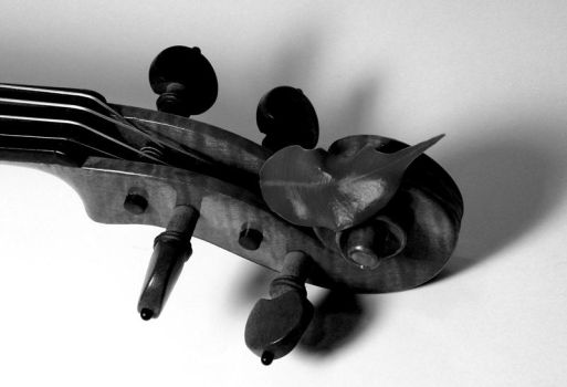 Violin Scroll BW by kineticdesign